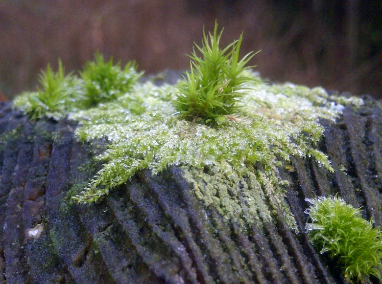 More Moss on a Post